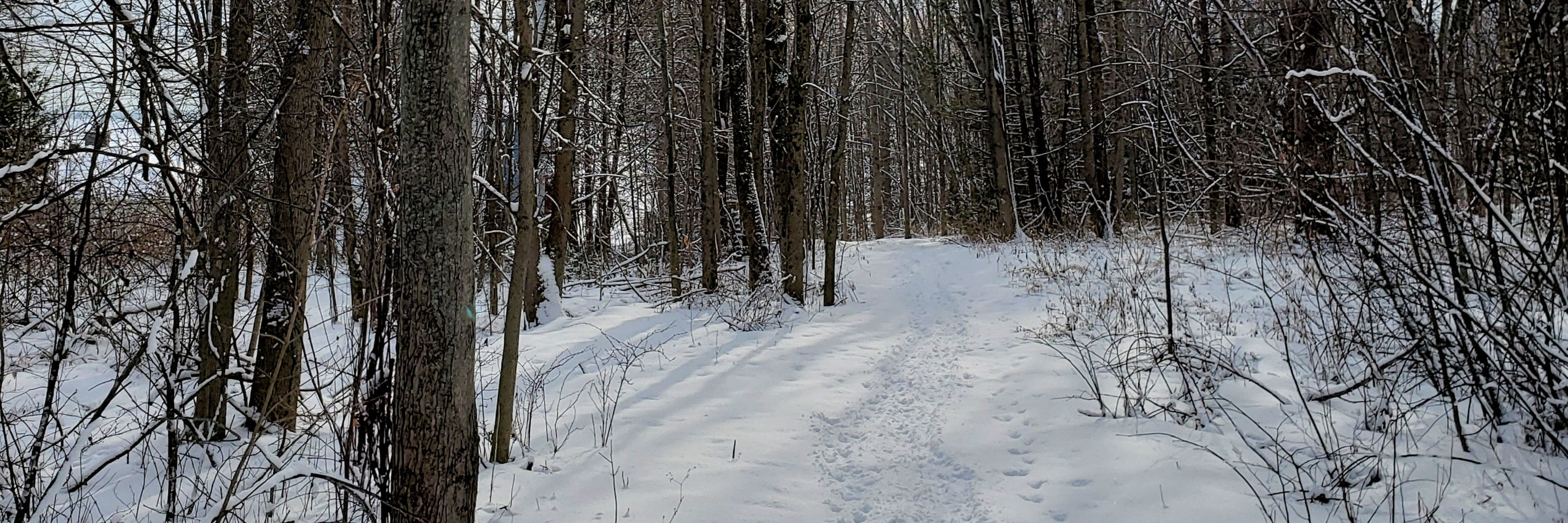 Trail with snow